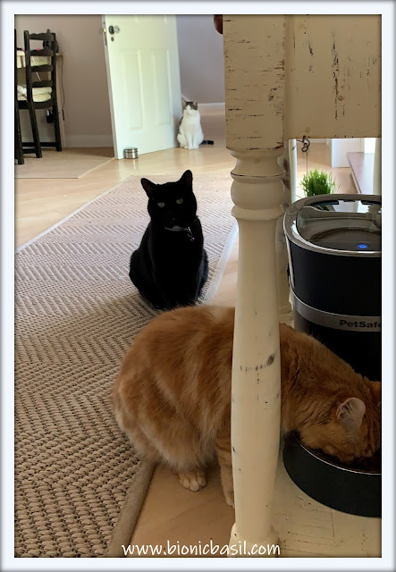 What's In The Box ©BionicBasil® Smart Feed Automatic Dog and Cat Feeder - Purrlease Form An Orderly Queue