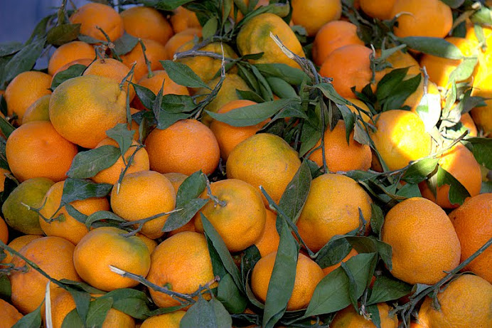 Satsuma mandarins...the perfect winter snack, gift, everything!