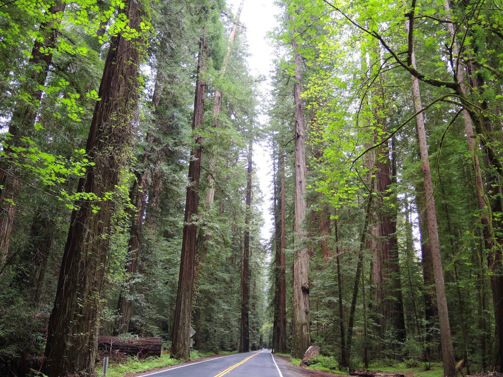 Redwood national park 9