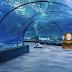 Father Son Aquarium Escape