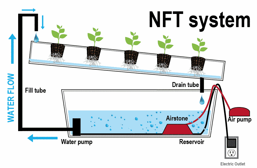 Hidroponik Sistem NFT