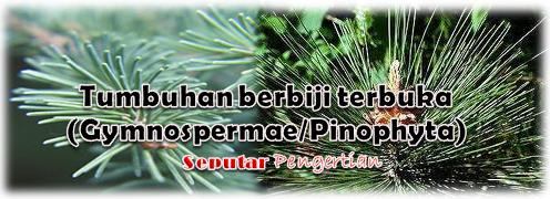 Tumbuhan berbiji terbuka (Gymnospermae/Pinophyta)