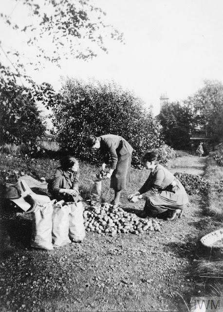Members of the Glasgow Battalion, Women's Volunteer Reserve tending to the potatoes grown on their plot, c.1915 © IWM (Q 108002)