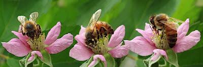 insectes et animaux utiles du jardin