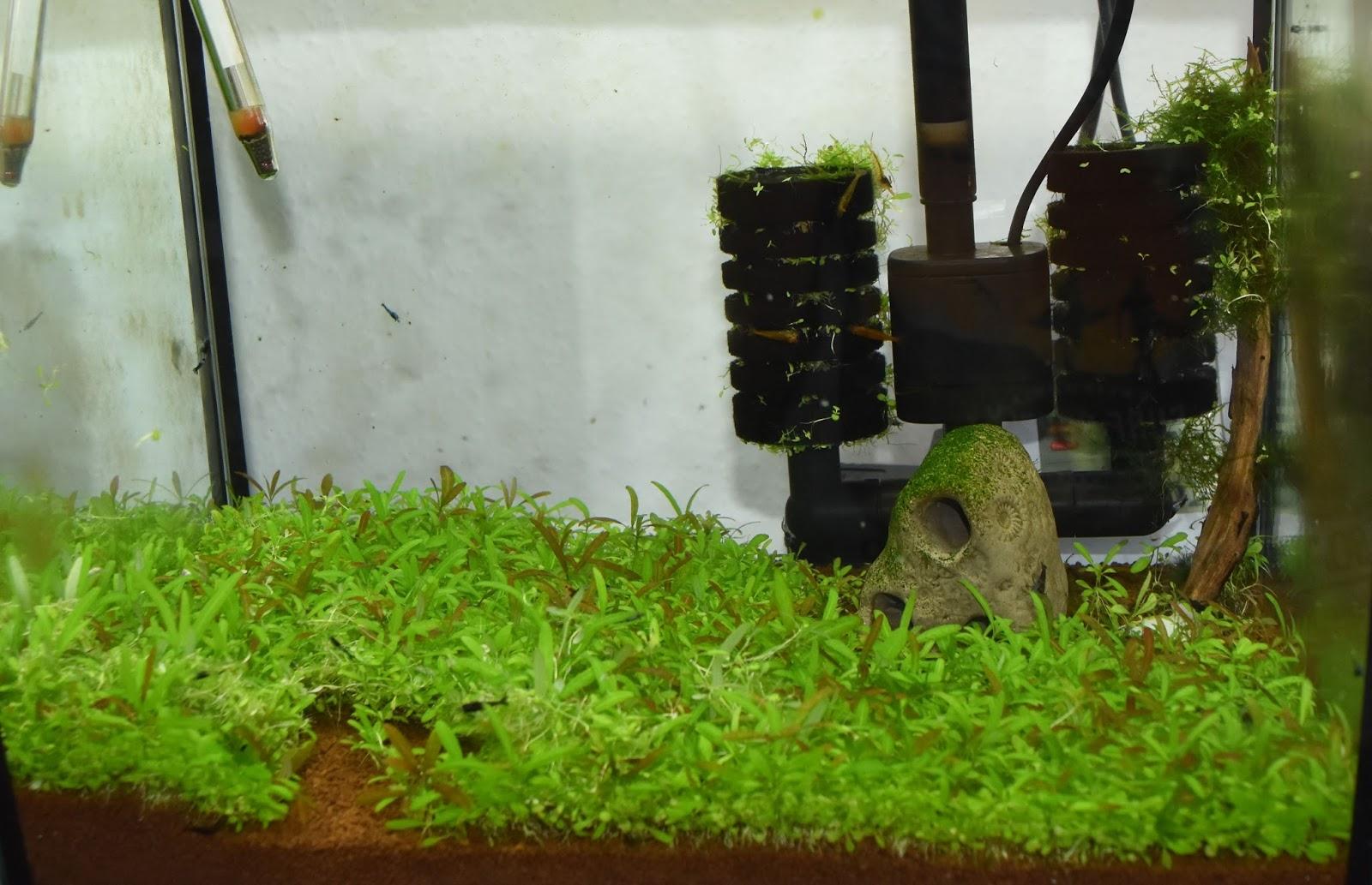 Aquarium Pflanzen Samen Zuchten Emerse Oder Submerse