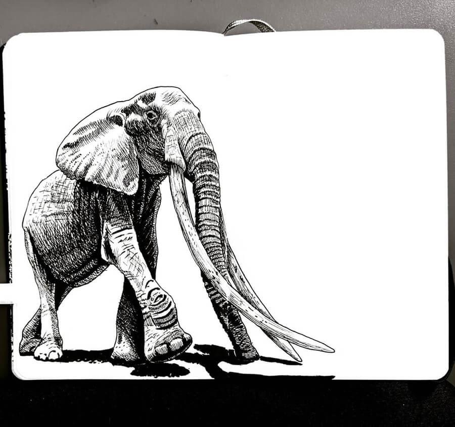 05-Elephant-Tim-Rees-www-designstack-co
