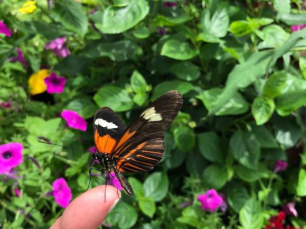 Foellinger-Freimann Botanical Conservatory: Butterfly Exhibit