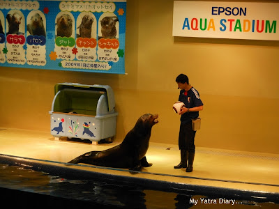 The sea lions show at the Epson Aquarium, Prince Hotel Shinagawa - Japan
