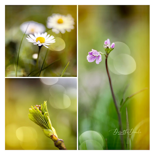 spring, Frühling, Sauerland, Dorothe Domke, collage, color fine art, photoart, Fotoart