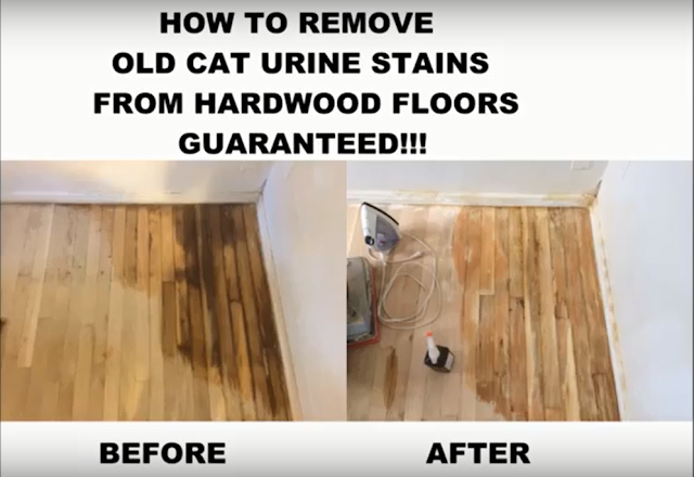 old cat urine in wood floor
