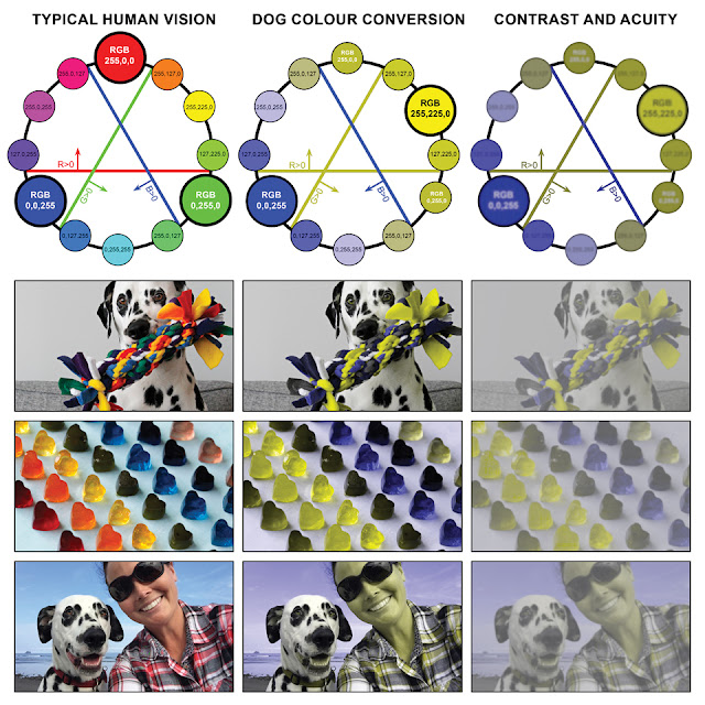 Colour wheel for dog vision vs. human vision, with example photos adjusted to show the image through a dog's eyes