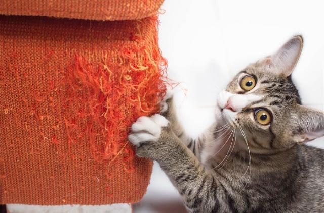 perilaku kucing