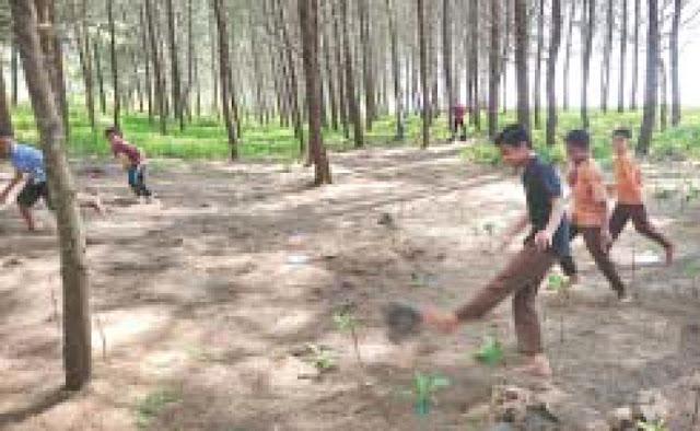 Anak-anak asyiki bermain bola di bawah rindangnya hutan pinus Pantai Kata, Kota Pariaman