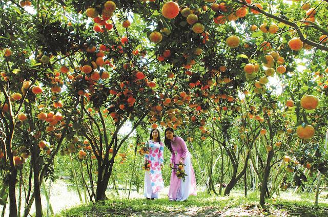 6 loại trái cây Việt Nam đặc biệt được khách Tây yêu thích