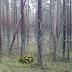 Bernati Forest Escape