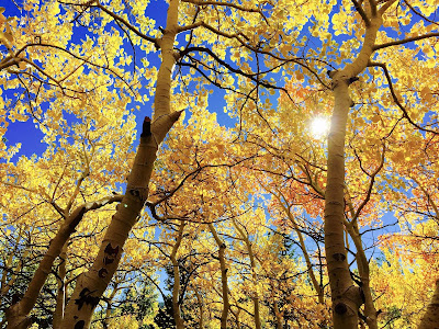 yellow leaves widescreen hd wallpaper