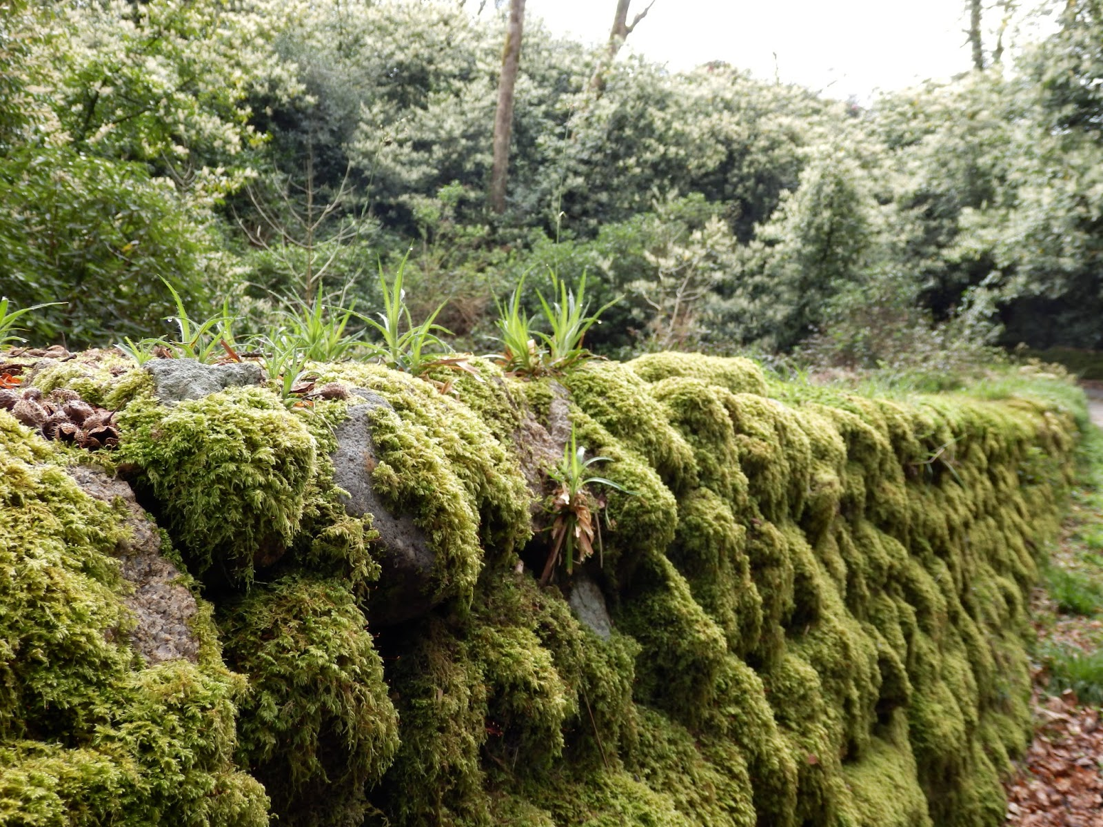 Cornish stone walls covered with moss