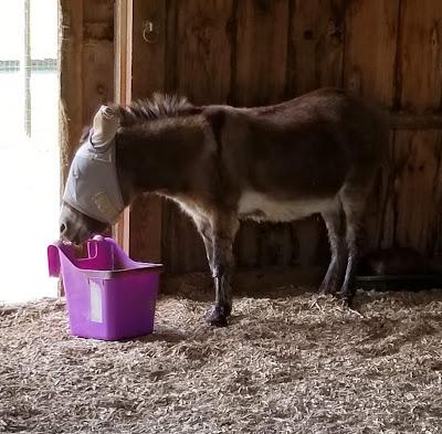 mini donkey with hanging bucket on ground