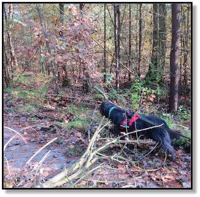 Sturmschaden im Wald