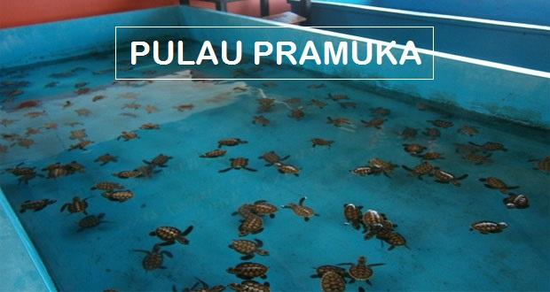 Paket Wisata Murah ke Pulau Pramuka yang Memukau