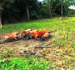 Dampak Pencemaran Tanah dan Penanggulangannya