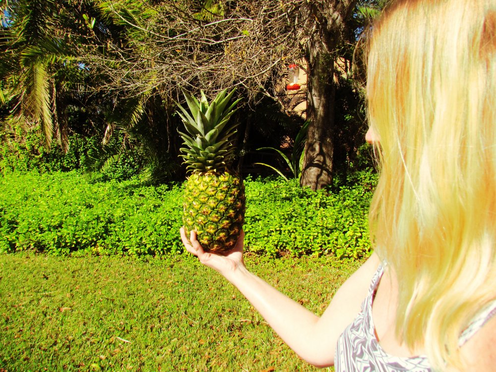 A blonde woman holding an organic pineapple up to the Florida sun in the summertime