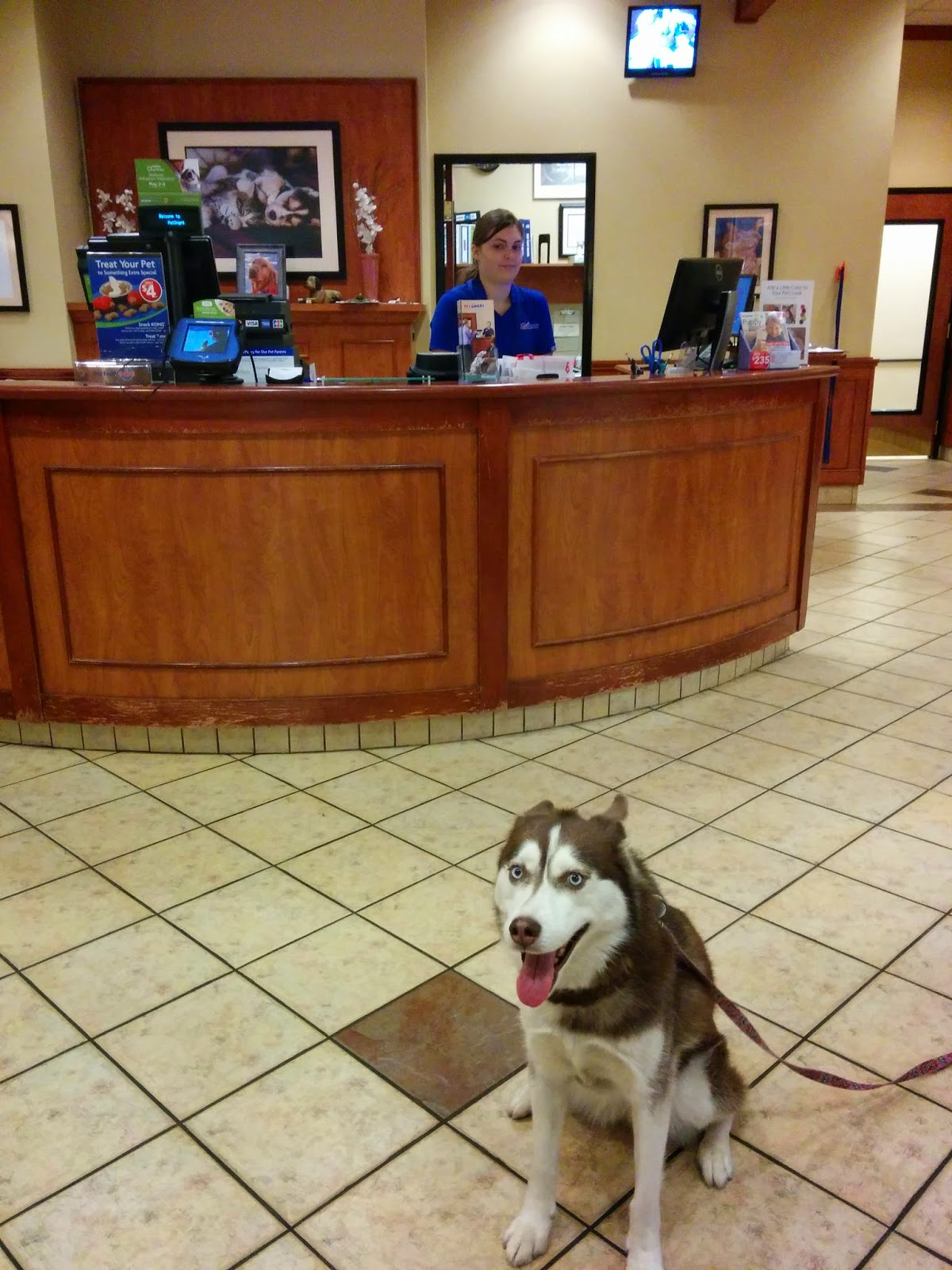 Icy loves PetSmart doggie day camp!