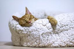 8 Cara Mengatasi Susah Tidur Pada Waktu Malam