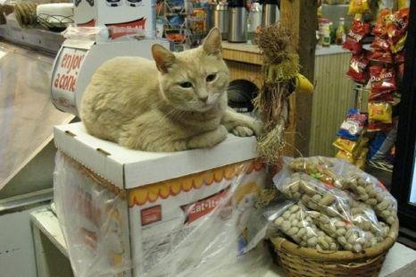 Stubbs, el gato alcalde