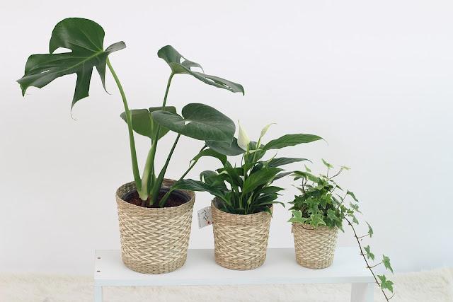 filtrazione-aria-fai-da-te-piante-in-casa