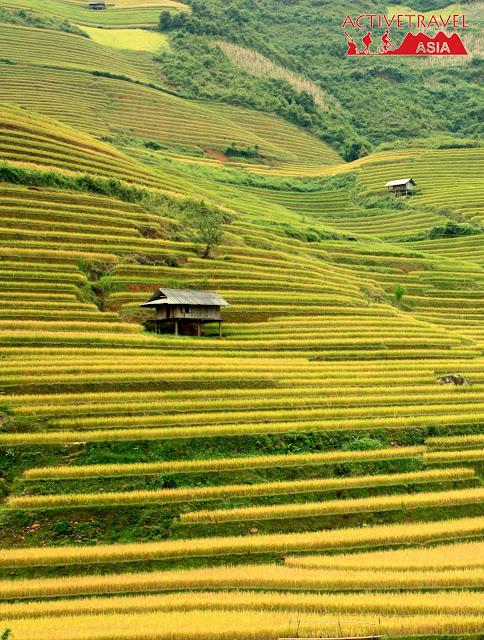 mu-cang-chai-vietnam