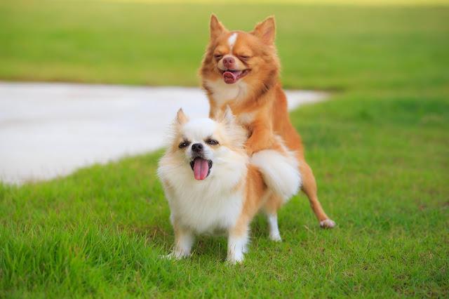Sterilisatie hond   Beterschap cadeaus hond
