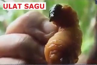 7 Makanan Ekstrem Khas Indonesia