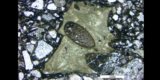 Photomicrograph of a vesicular green shard from the Onaping Formation of the Sudbury impact basin. Image credit: Paul Guyett, Trinity College Dublin.