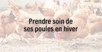 Prendre soin de ses poules en hiver