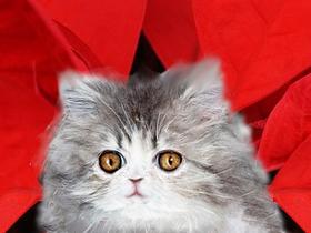 永遠猫(素材使用)