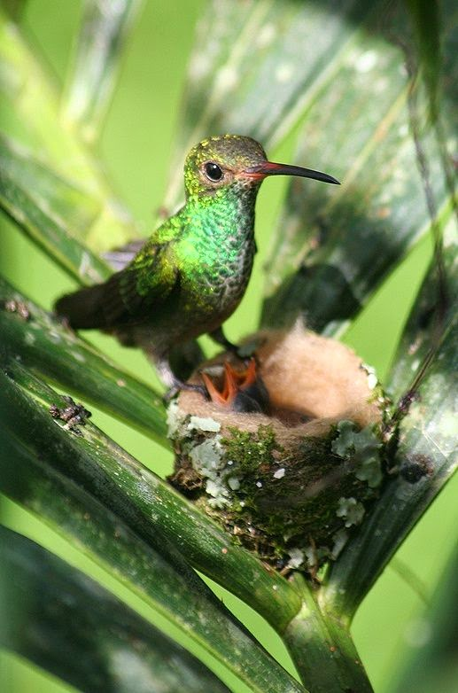 Newly Hatched Hummingbirds | Content in a Cottage