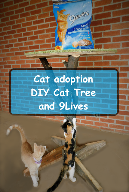Cat Adoption Success Story with 9Lives and DIY Cat Tree