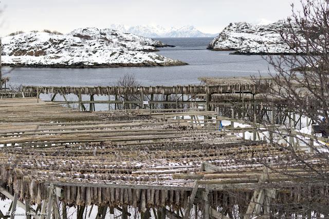 Islas Lofoten, secaderos de skrei en Henningsvaer por El Guisante Verde Project
