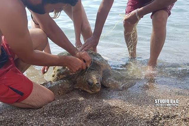 Λουόμενοι διέσωσαν θαλάσσια χελώνα στο Ναύπλιο που είχε μπλεχτεί σε δίχτυα