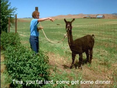 """Tina, you fat lard, come get some dinner!"" - Napoleon Dynamite alpaca quote"