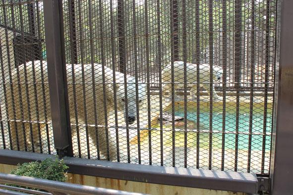 Zoos In Japan Himeji City Zoo