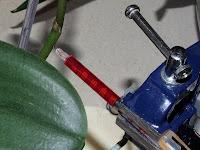 barwienie storczyków