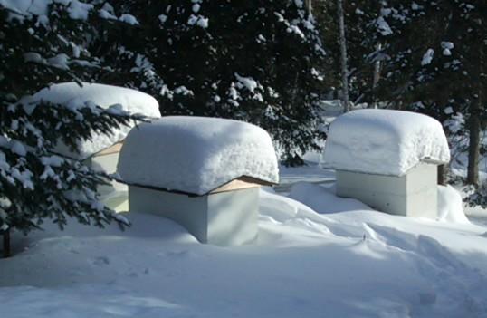 Ξεχειμώνιασμα μελισσιών σε περιοχές με χιόνι και ορεινά