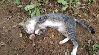 Kucing diam di kuburan
