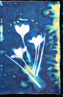 Wet Cyanotype_Sue Reno_Image 307