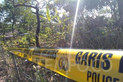 Polisi Cari Pemilik Pohon Sengon Terduga Penyebab Listrik Mati Massal