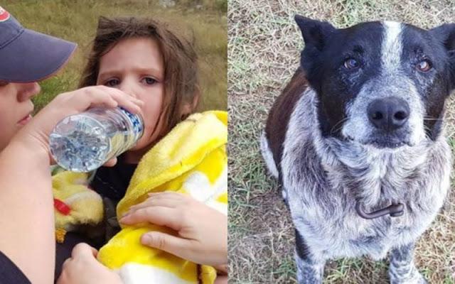 Пропавшую девочку целых 17 часов охранял старый слепой пес!