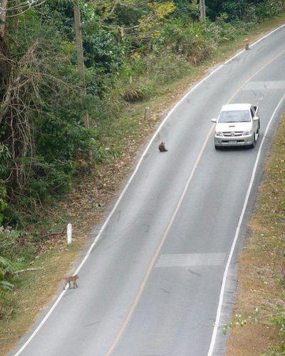 Обезьяны попрошайки на дороге