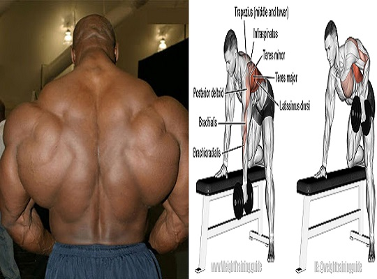 6 Back Workouts for bigger Mass